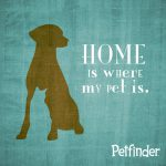 201605-home-is-where-my-pet-is